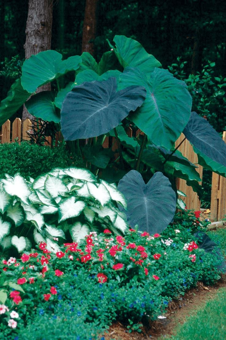 Plants Hide AC Unit